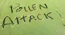 Pollen Attack